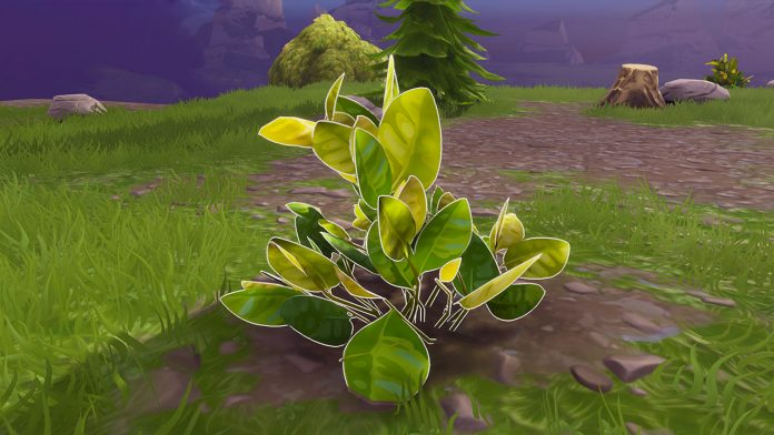 Fortnite how to get fibrous herbs
