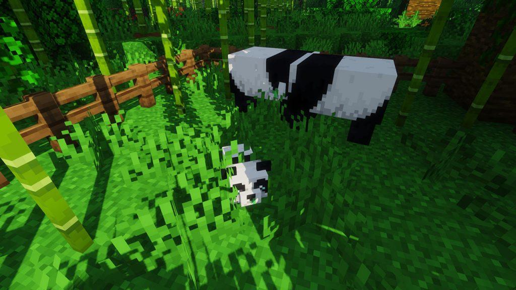 breeding pandas